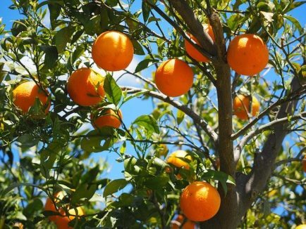 Ateliers DIY cosmétiques au naturel - poudre d'orange