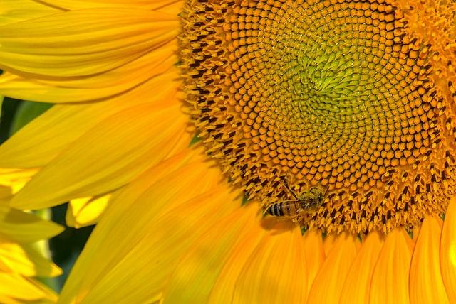 le miel en cosmétique
